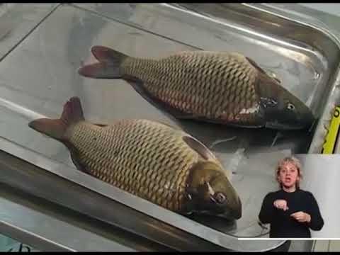 О мониторинге эпизоотической ситуации в рыбохозяйственных водоемах Ростовской области