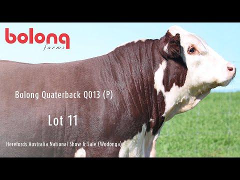 BOLONG QUATERBACK Q013 (P)