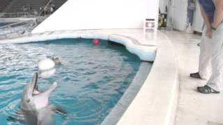 Meet the Dolphins (binaural sound, best with headphones!)