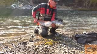 Крупный таймень / рыбалка на Алтае