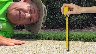 Lawn Cutting Height Summer Heat