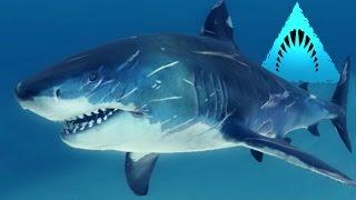 TIGER SHARK! - Man Eater! - Depth | Ep4 HD