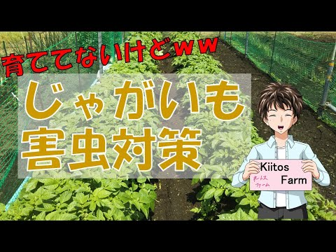 , title : '【じゃがいもの栽培】今年は育ててないけど、害虫対策!