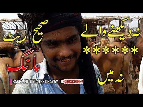 BEAUTiFUL Sahiwal Bull and Cholistani Bull for Qurbani Eid