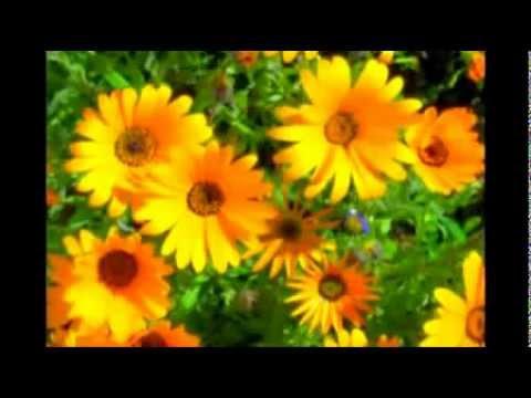 Песня женское счастье караоке