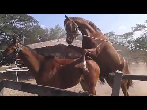 Oral-Sex Homosexuell Video
