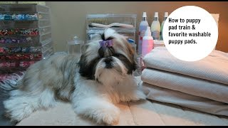 How to potty train your puppy to use puppy pads