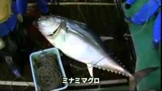 追跡!ニッポンのマグロ~世界の海から食卓へ~予告編