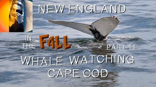 Cape Cod Barnstable Whale Watching Trip New England in the Fall