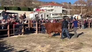 Bullfight - Chega de Bois - Castanho vs Cabano | 2019 | BOTICAS