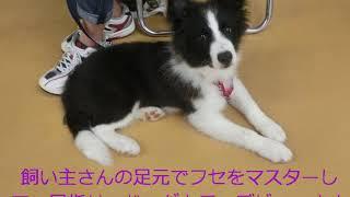 動画サムネイル:6月に子犬コースを開催しました!!(平成26年)
