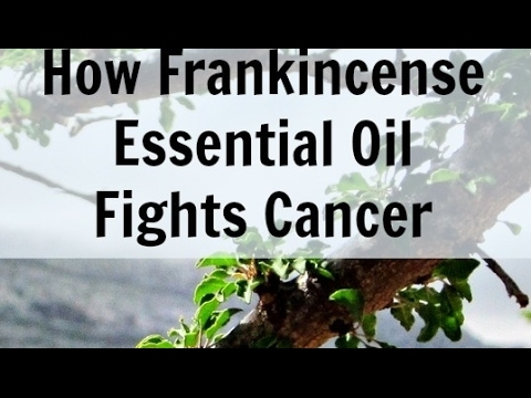 Video Can Frankincense Oil Cure Cancer? Frankincense Oil Kills Cancer Cells Studies Show
