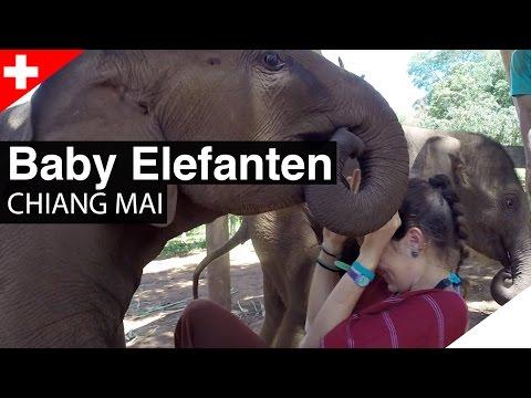 Patara Elephant Farm - Spielen mit Baby Elefanten! CHIANG MAI, Thailand