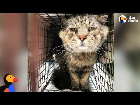 Feral Senior Cat Becomes A Total Mama's Boy - MR. BELVEDERE | The Dodo