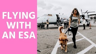 Flying with an ESA Dog // Airport Walk Through