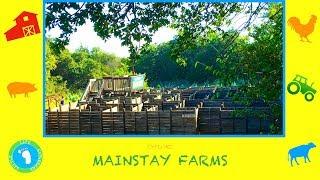 Mainstay Farms