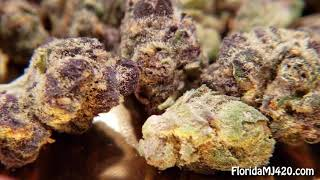 Girl Scout Cookies 15.8% THC Flower By Trulieve - Florida Medical Marijuana Reviews