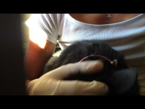 A un gattino striscia la salita che fare