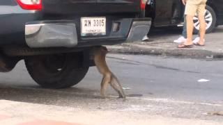 Opica rozobera auto