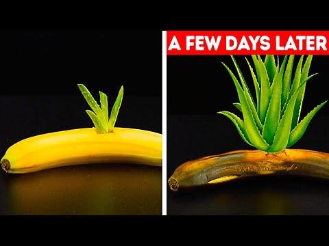 סרטון עם 27 טיפים וטריקים לגינון וגידול צמחים