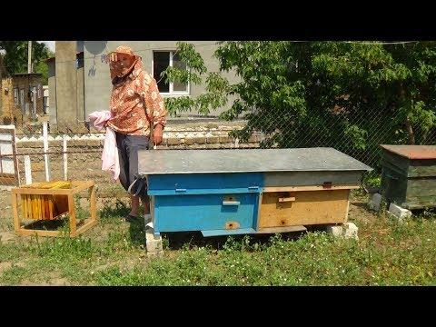 Отбираем медовые рамки на пасике у валентина