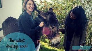 The Cutest Donkeys Ever! | EOB Vlogs