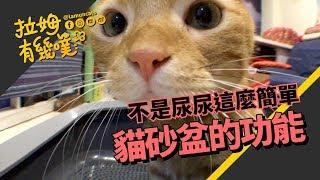 About cat's toilet|LAMUNCATS ♧