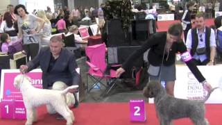 World Dog Show, Budapest 2013, part 1