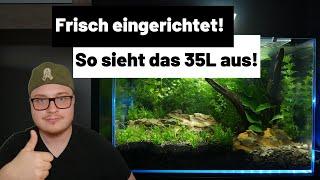 35L Aquarium einrichten (Knossi Aquarium) - Motto Aquarien #1