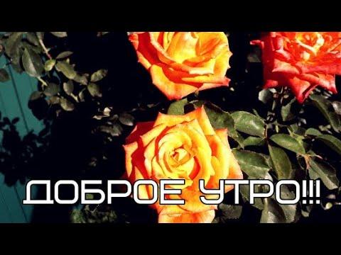 Доброе утро))Пожелание для любимого человека))  С добрым утром))Мои стихи)).