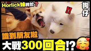 【狗仔】Horlick妹終於...係香港識到朋友啦🥰大戰300回合