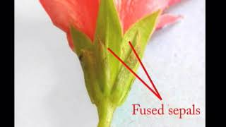Flowers – description of parts and adaptations