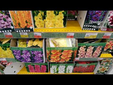 Орхидеи в Ленте Розы Груши Шелковица Саженцы и Луковицы красивых цветов