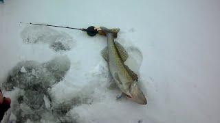 Фишинг35 отчеты о рыбалке кубенское озеро зима 2020