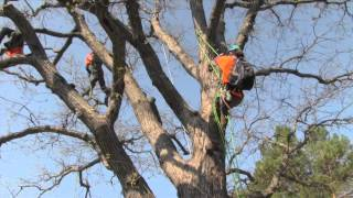 Aerial Rescue Champion Ben McMullan At The 2014 MN Tree Climbing Championships