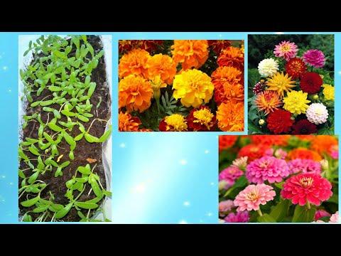How To Grow Flower Seeds. Взошла рассада.  Посадка цветов, Лунный календарь .