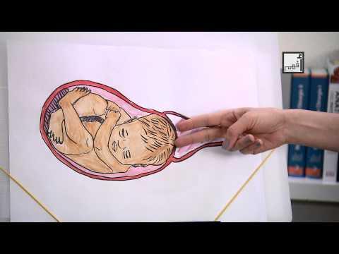 Vaginal Birth مراحل الولادة الطبيعية