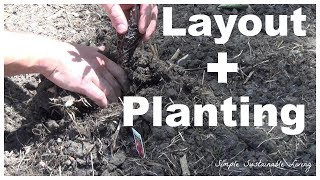 Kitchen Garden  -  Layout And Planting