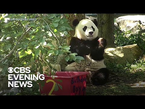 Bei Bei the giant panda leaving the National Zoo for China