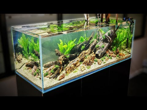 HOW TO AQUASCAPE a 125 gal. Nature Aquarium
