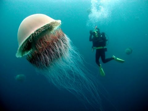 Best Jelly fish collection