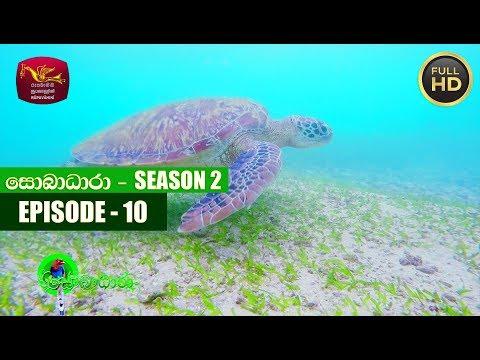 Sobadhara - සොබාධාරා | Season- 02 | Episode- 10 | 2018-03-16 | Rupavahini Documentary
