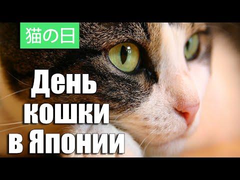 День Кошки в Японии | Cat Day in Japan | 猫の日 онлайн видео