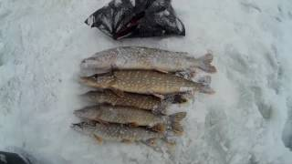 Рыбалка в волоколамском районе сычево