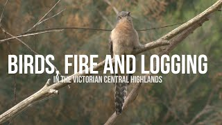 Birds, fire and logging in the Victorian Central Highlands
