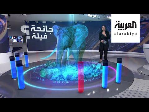 العرب اليوم - شاهد: مرض غامض بين الفيلة يقتل العشرات من الطيب العملاق في بوتسوانا