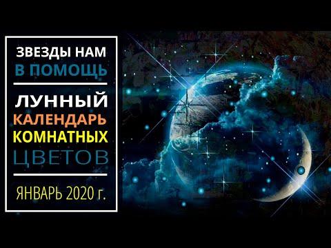 Январь 2020 г.   Лунный календарь комнатных растений