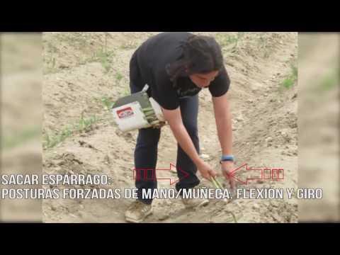 Fotograma del vídeo: Riesgos ergonómicos en el sector del espárrago