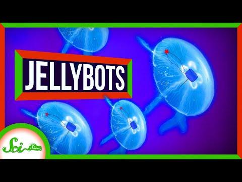 Medúzy proměněné v biohybridní roboty - Scishow