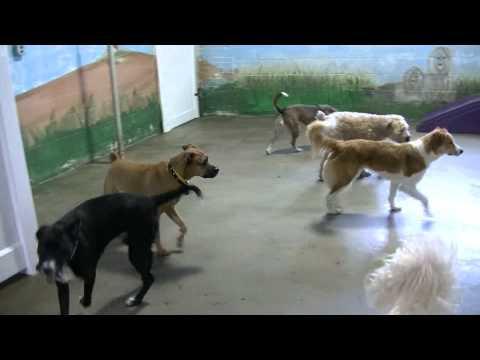 The Big dogs having a terrific Thursday 1-29